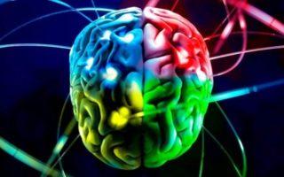 Изображения для статьи Какая часть мозга отвечает за сон