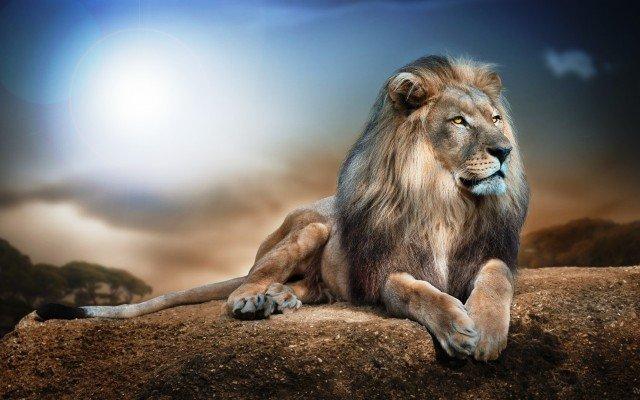 К чему снится во сне лев
