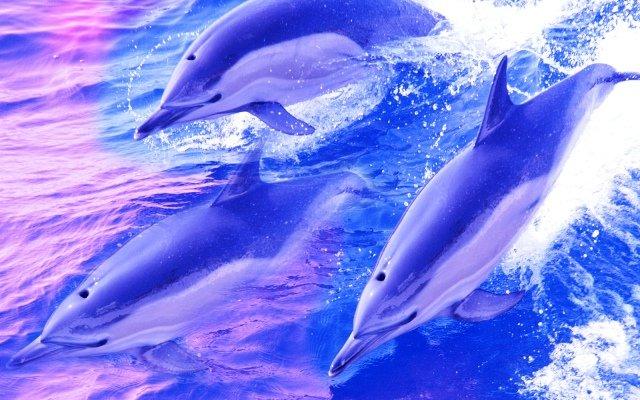 Видеть дельфина во сне