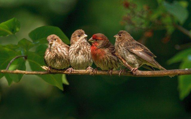 К чему снятся птицы во сне
