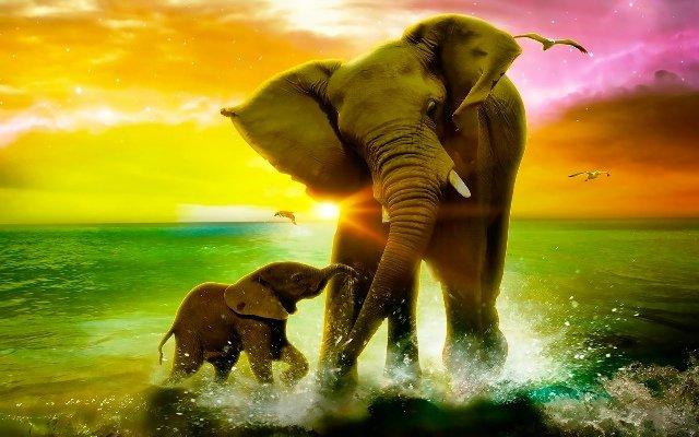 Видеть слона во сне