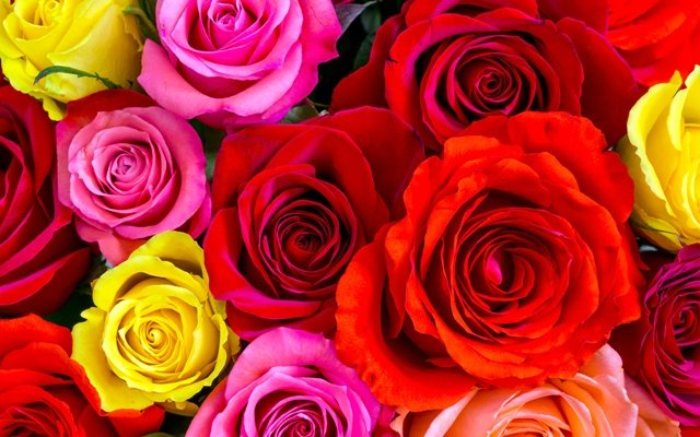 Видеть розы во сне