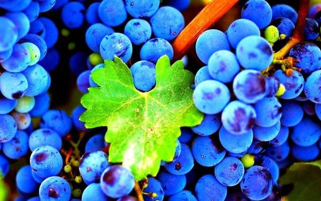 Видеть виноград во сне