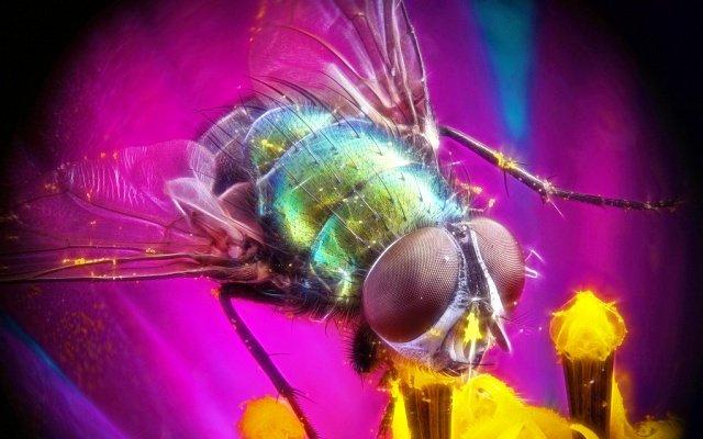 Видеть мух во сне