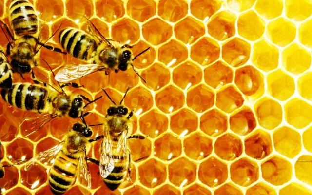 Пчелы во сне к чему снится