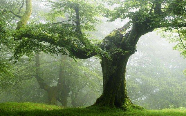 Видеть дерево во сне