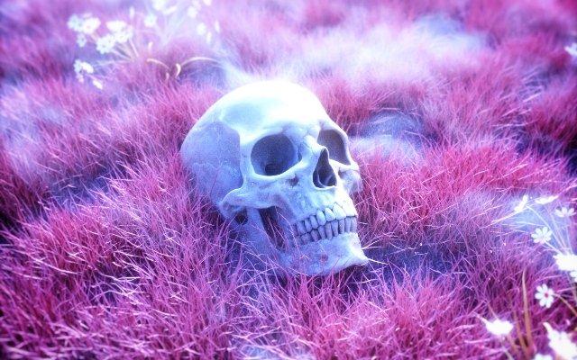 Видеть во сне череп или видеть череп в воде, трактовка по соннику