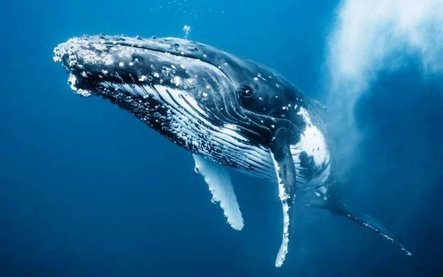 Видеть во сне кита