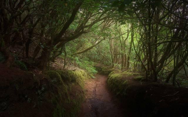 Видеть лес во сне
