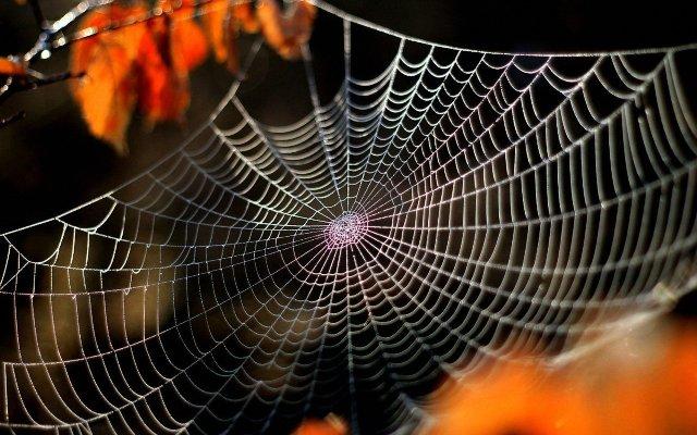 Видеть паутину во сне