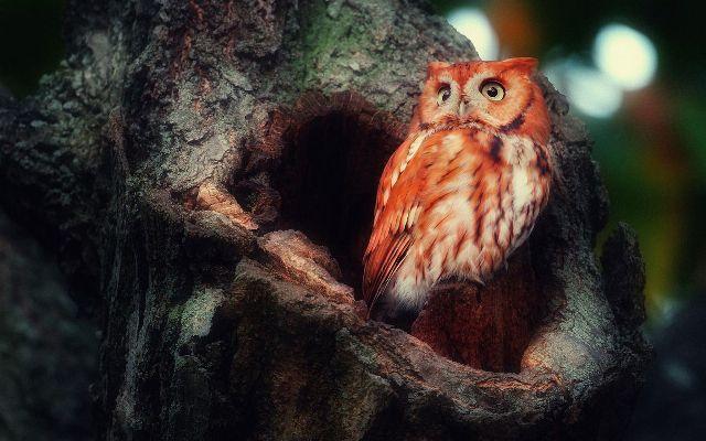 Видеть во сне сову, белую и большую, что означает по соннику