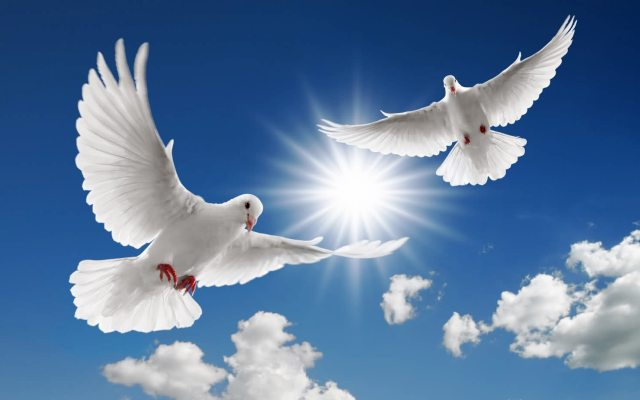 Видеть во сне голубя белого или много голубей, значение по соннику