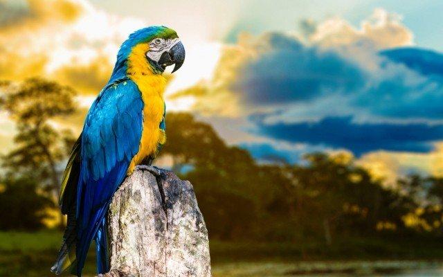 Видеть попугая во сне, поймать руками или видеть много попугаев