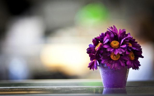 Цветок в горшке расцвел или сажать, пересаживать цветок значение по соннику