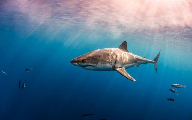 Видеть во сне акулу к чему снится женщине по соннику Миллера