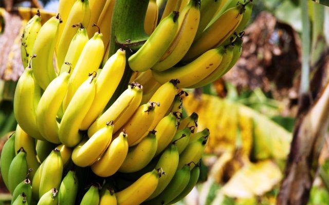 Видеть во сне банан или к чему снятся много бананов во сне