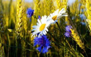 Изображения для статьи К чему снятся Цветы