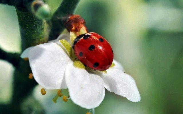 К чему сняться во сне насекомые, жуки для женщины