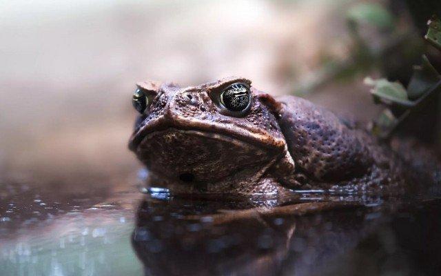 Видеть во сне жабу большую, живую к чему снится по соннику Миллера