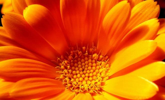 Сонник Оранжевый цвет к чему снится. Сон Оранжевый цвет платья, цветок, змея