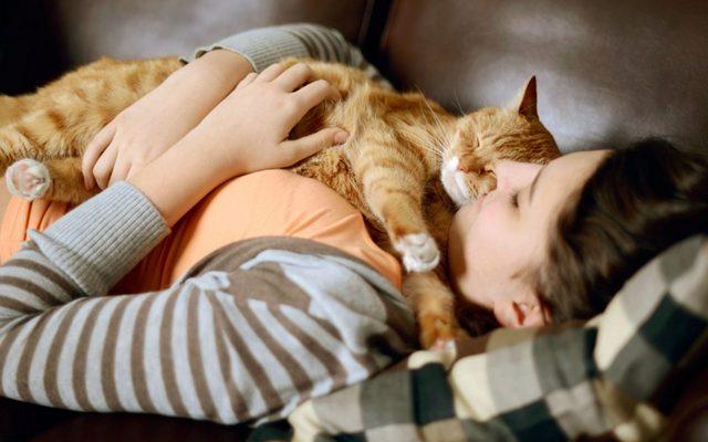 7 причин почему кошки спят на человеке