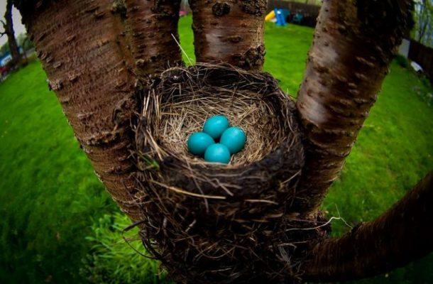 Изображения для статьи К чему снится Гнездо