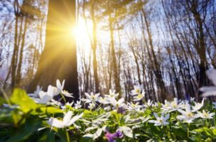 Изображения для статьи Сон Весна